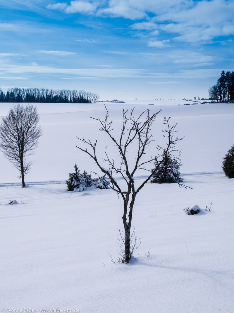 Heidelandschaft Erpfenhausen