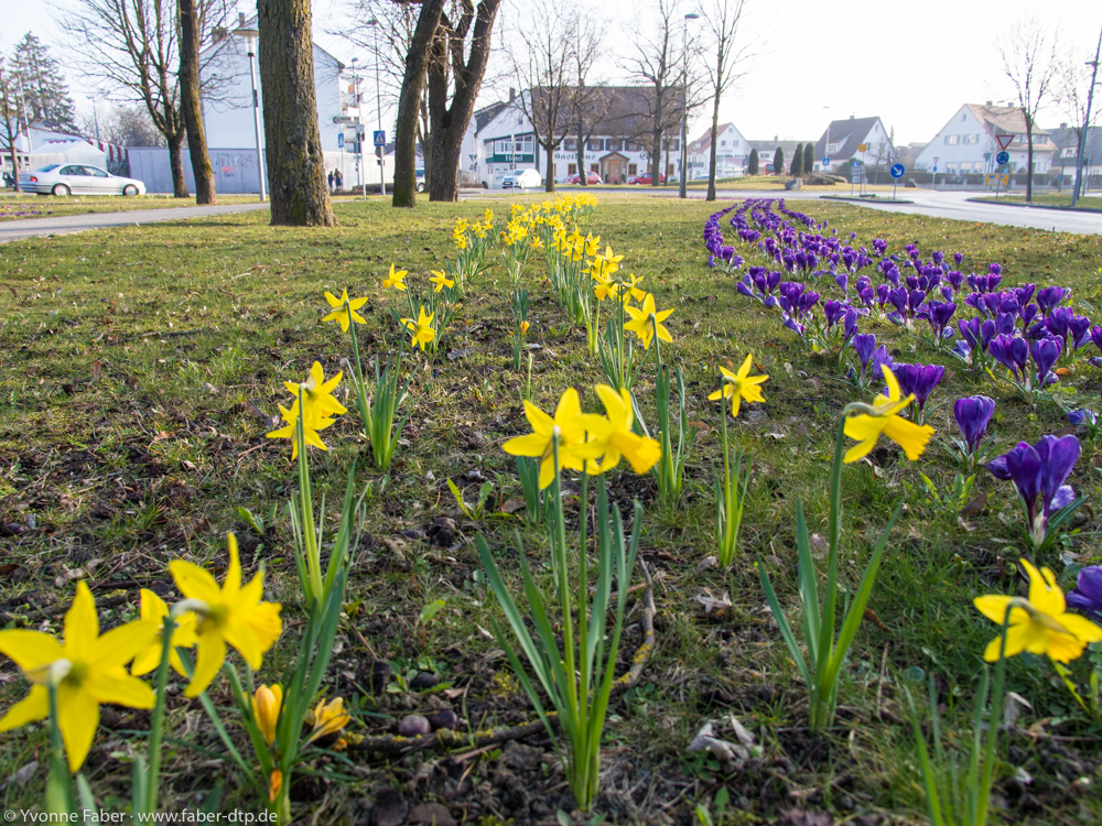 Geometrischer Frühling