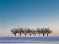 Baumgruppe bei Albeck