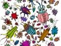 käferdoodle